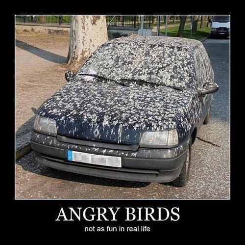 [Pilt: 4290_Real_life_angry_birds_1.jpg]